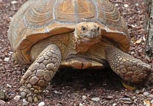 tortuga-portaldexativa