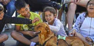 Éxito de asistencia en el Desfile de perros abandonados AUPA-BIOPARC para reescribir la vida de muchos canes