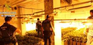 La Guardia Civil desmantela un cultivo Indoor de más de 400 plantas de marihuana en una vivienda de la localidad de Cerdá