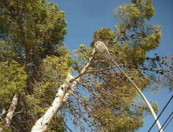pinos-ies-estacio-ontinyent
