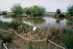 laguna-del-samaruc
