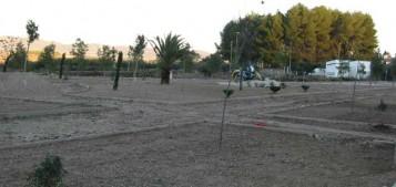 Parque Pla del Conde Albaida