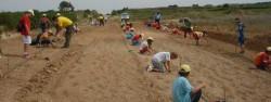 Plantación 800 árboles